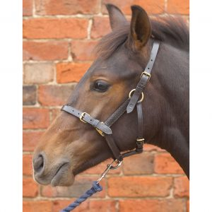 Hy Leather Foal Headcollar