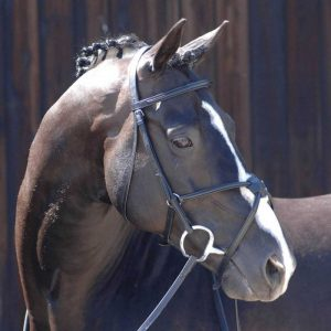 Bridle – Caldene Black Label Grackle Noseband