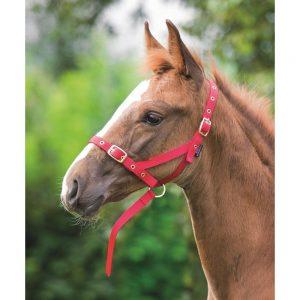 Shires Foal Nylon Slip