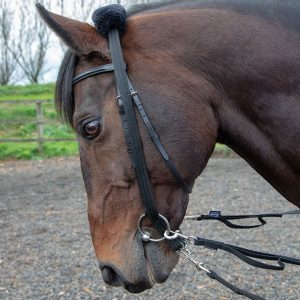 Shires Lunging Adapter