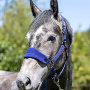 LeMieux Vogue Fleece Headcollar & Leadrope – Ink Blue / Navy