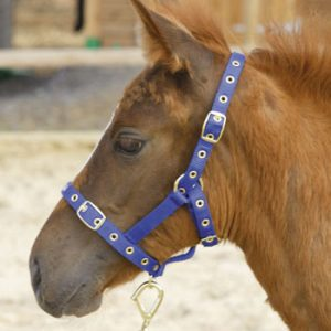 Shires Foal Nylon Headcollar