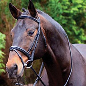 Caldene Black Label Crank Noseband Bridle- Black