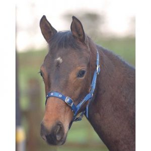 Cottage Craft Foal Headcollar Large