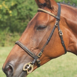 Inhand Bridle – Shires Clincher