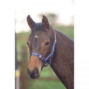 Cottage Craft Foal Headcollar – Standard