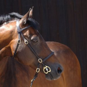 Inhand Bridle – English Leather with Brass Fittings