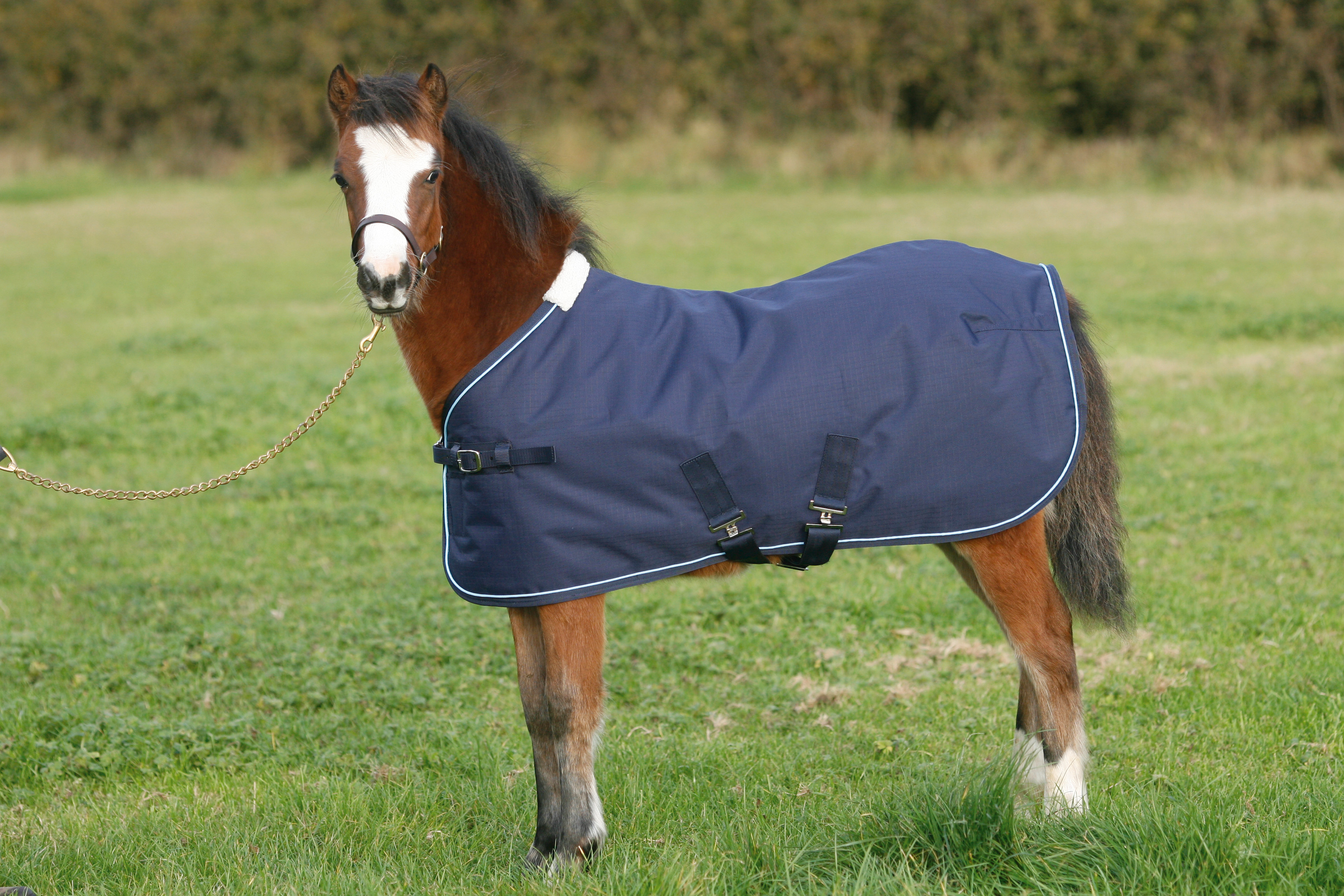Mark Todd Foal Turnout Rug Annaghmore