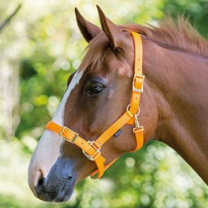 Shires Pro Adjustable Headcollar
